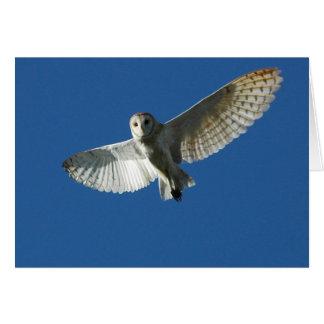 Barn Owl in Daytime Flight Card