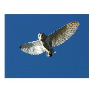 Barn Owl in Daytime Flight Postcard