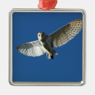 Barn Owl in Daytime Flight Silver-Colored Square Decoration