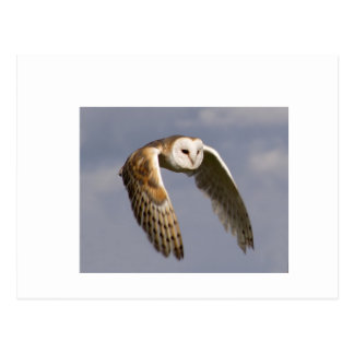 barn-owl-in-flight-small postcard