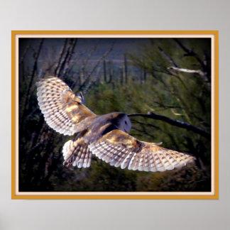 Barn Owl in midflight Posters