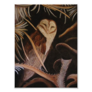 barn owl in pastel animal painting photograph