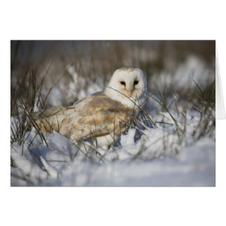 Barn Owl in Snow Card