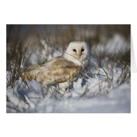 Barn Owl in Snow Card