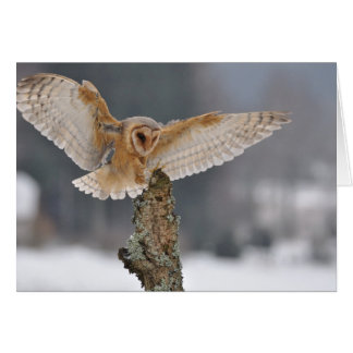 Barn owl landing to spike greeting card