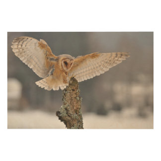Barn owl landing to spike wood wall decor