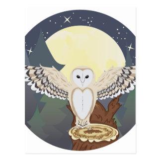 Barn Owl on a Tree Stump 3 Postcard