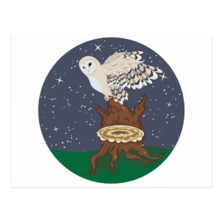 Barn Owl on a Tree Stump [Converted]-01 Postcard