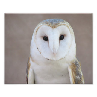 Barn Owl Photo Art