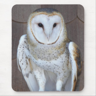 Barn Owl Photo Mouse Pad