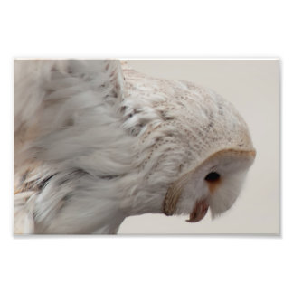 Barn Owl Photo Print