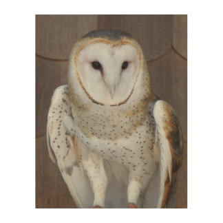 Barn Owl Photo Wood Wall Decor