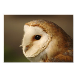 Barn Owl Portrait Art Photo