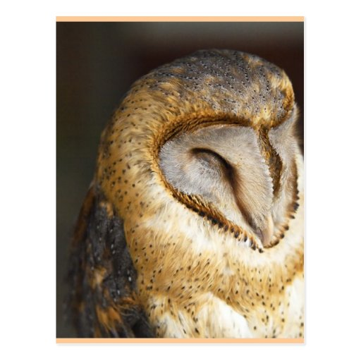 BARN-owl Postcards