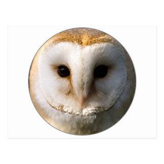 """Barn Owl"" Postcards"
