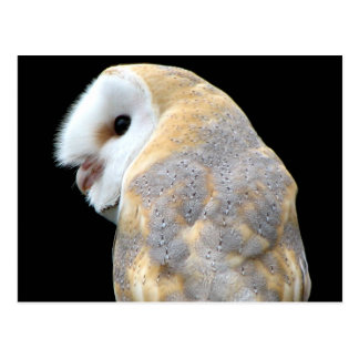 Barn Owl Postcards