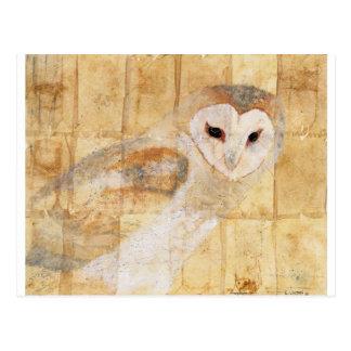 Barn Owl Postcard