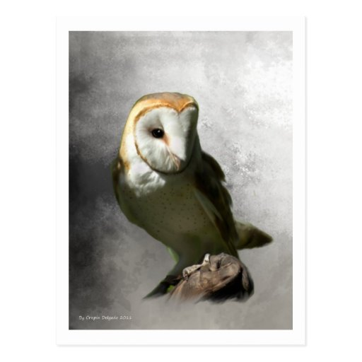 Barn Owl Post Cards