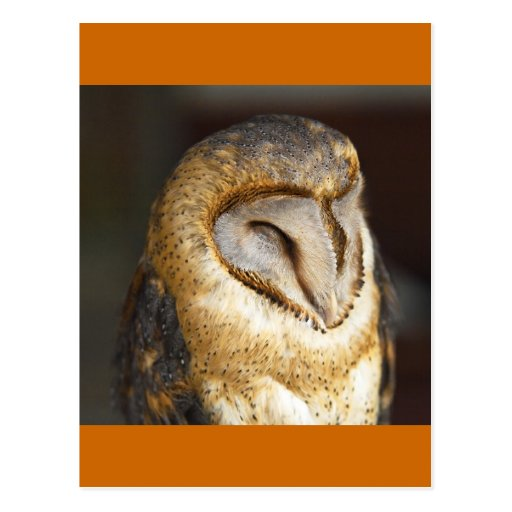 BARN-owl Post Card
