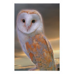 Barn Owl Poster Poster Print