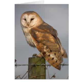 Barn Owl Slightly Ruffled Card