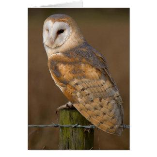 Barn Owl (Tyto alba). Card