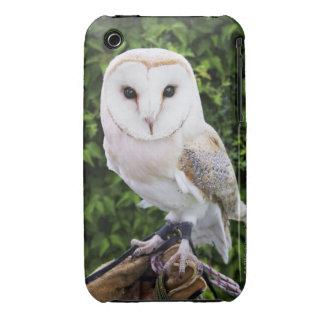 Barn owl (Tyto Alba) on glove iPhone 3 Cases