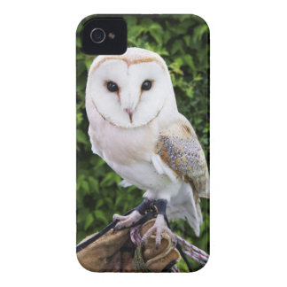 Barn owl (Tyto Alba) on glove iPhone 4 Cases