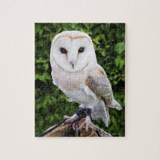 Barn owl (Tyto Alba) on glove Jigsaw Puzzle