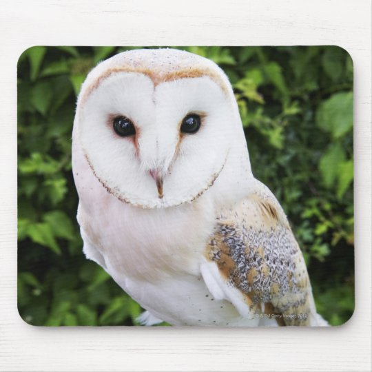 Barn owl (Tyto Alba) on glove Mouse Mat