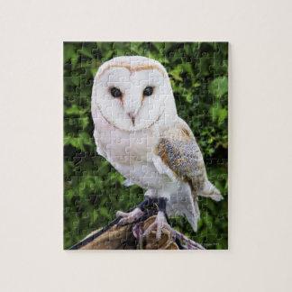 Barn owl (Tyto Alba) on glove Puzzles
