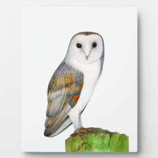Barn Owl Tyto Alba Watercolor Painting Artwork Plaque