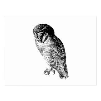 Barn Owl Vintage Wood Engraving Post Card