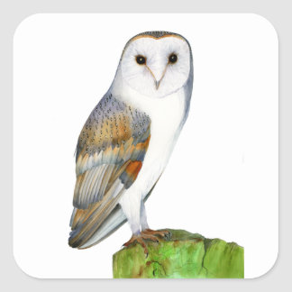Barn Owl Watercolour Painting Square Sticker