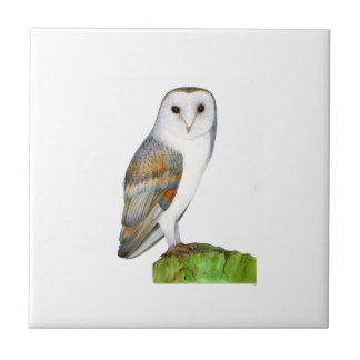 Barn Owl Watercolour Painting Tile