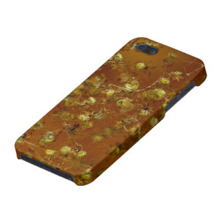 Barn Spiders iPhone 5/5S Cases