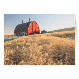Barn, summer wheat fields near Sprague, Eastern 1 Card