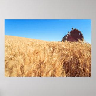 Barn, summer wheat fields near Sprague, Eastern 2 Poster
