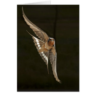 Barn Swallow in flight Card