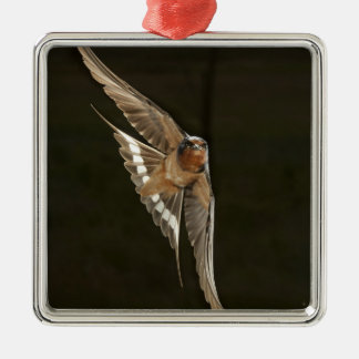 Barn Swallow in flight Christmas Ornament