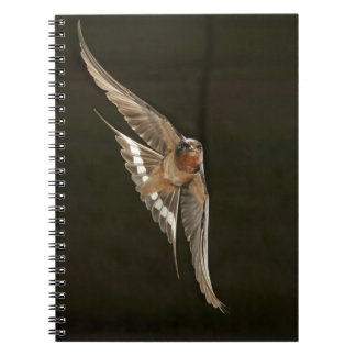 Barn Swallow in flight Notebook