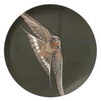 Barn Swallow in flight Plate