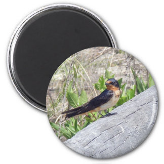 Barn Swallow Series 6 Cm Round Magnet