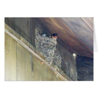 Barn Swallow Series Greeting Card