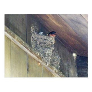 Barn Swallow Series Postcard