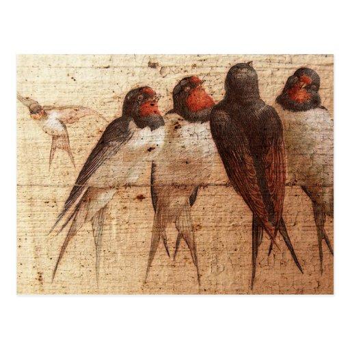 Barn Swallows Post Card