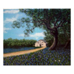Barn with Bluebonnets Posters