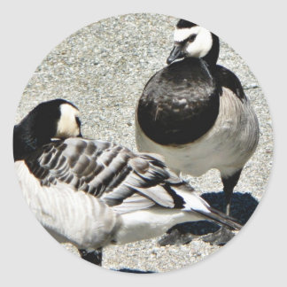 Barnacle Geese Classic Round Sticker