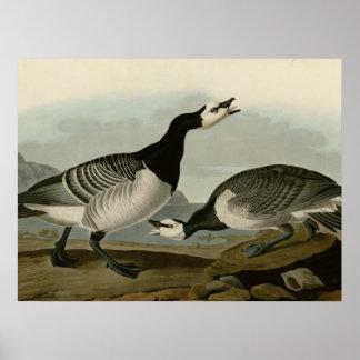 Barnacle Goose Poster
