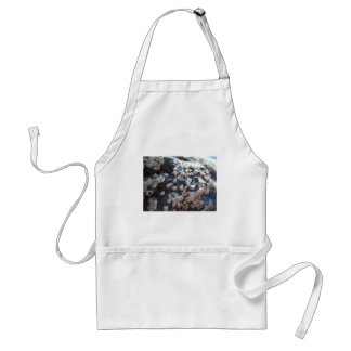 Barnacles 1 standard apron